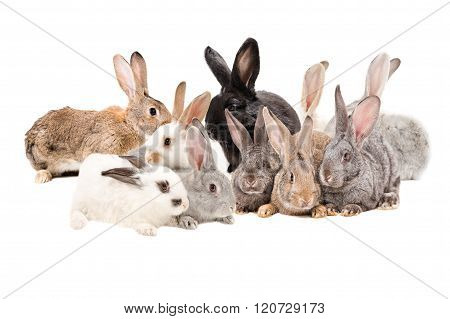 Group rabbits