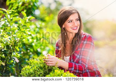 Beautiful gardener with little tree, green sunny nature