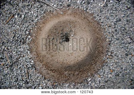 Ant Hill Entrance On Gravel