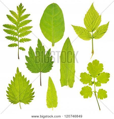 Set of leaves of different medicinal plants