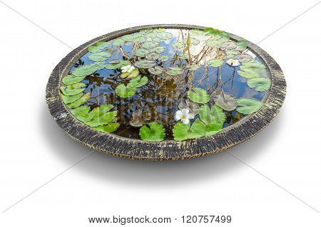 Pond In A Bowl