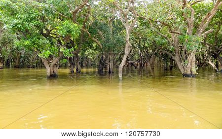 Flooded Trees In Cambodia