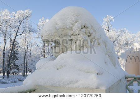 Lion under the snow