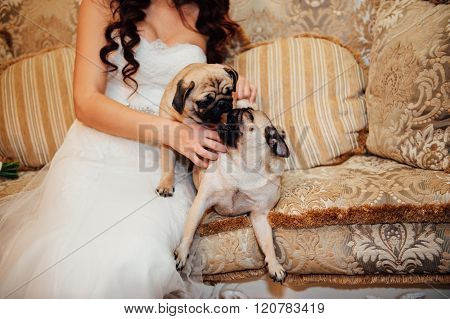 Pug On A Couch Looking At The Camera .