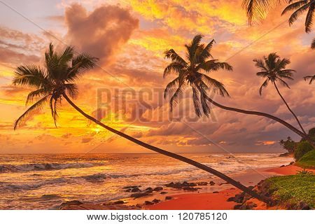 Sunset over the sea. Sri Lanka