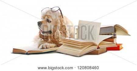 Dog and books isolated on white