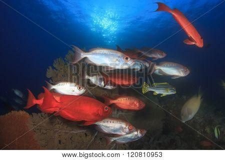 Fish school: Bigeyes and Gorgonian Fan Coral