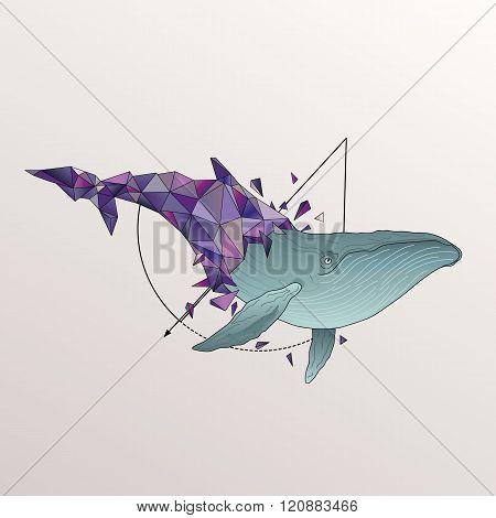 Humpback whale breaks free