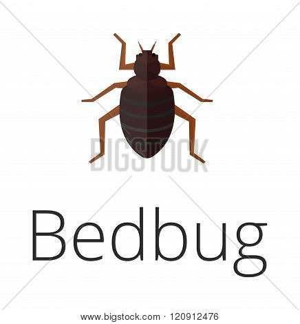 Bedbug parasite vector illustration.