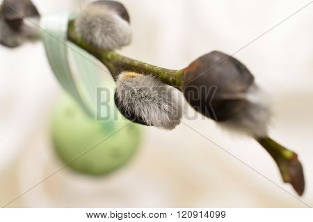 Pussy Willow catkins Flower Twig