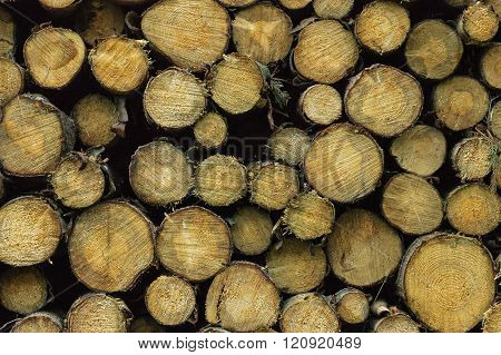 Timber/Lumber in Storage for Later Processing