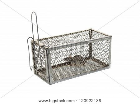 rat trap with a mouse inside isolated