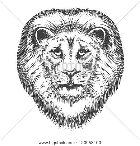 Hand Drawn Lion Head