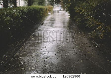 rainy day,selective focus on the nearest part, great DOF 1,2