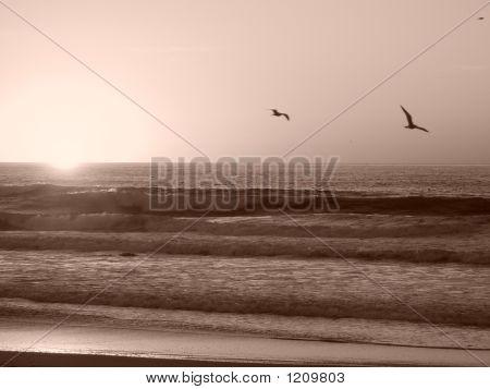 Black & White Sunset With Gulls