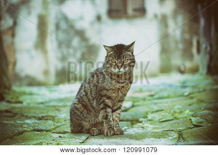 Street cat portrait