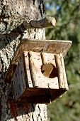 cut little homemade bird house hanging on the trunk of a tree. poster