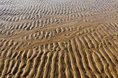 background texture rippled sand on a winter beach poster