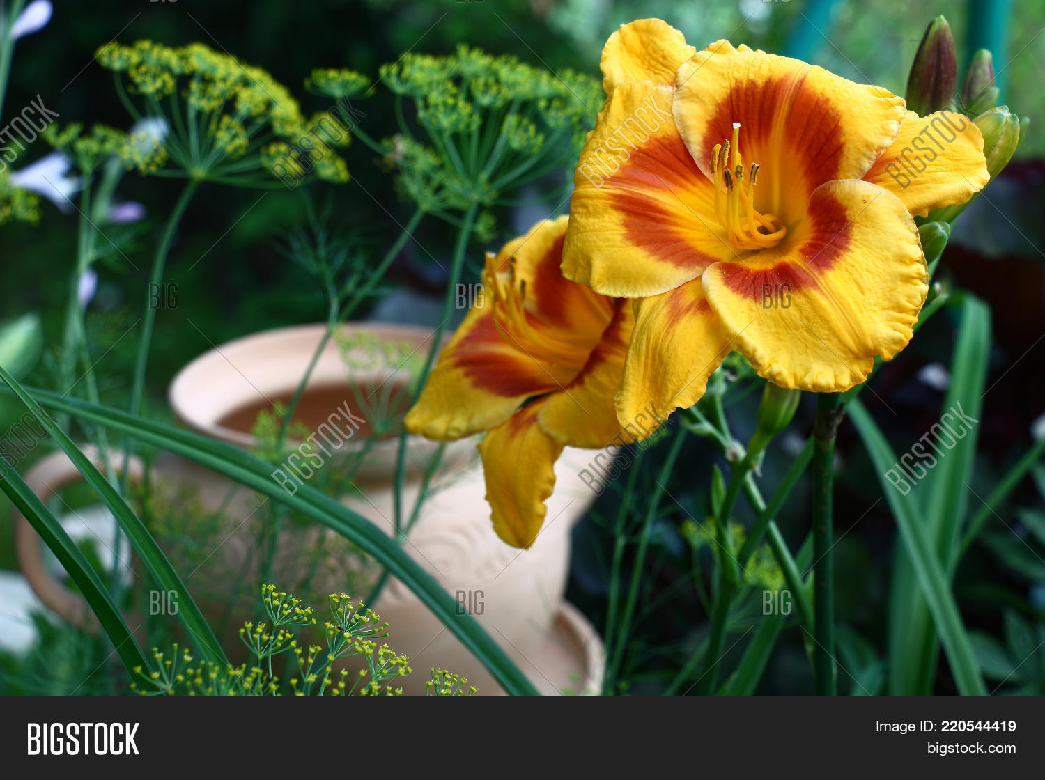 Garden Flower Bed Image Photo Free Trial Bigstock
