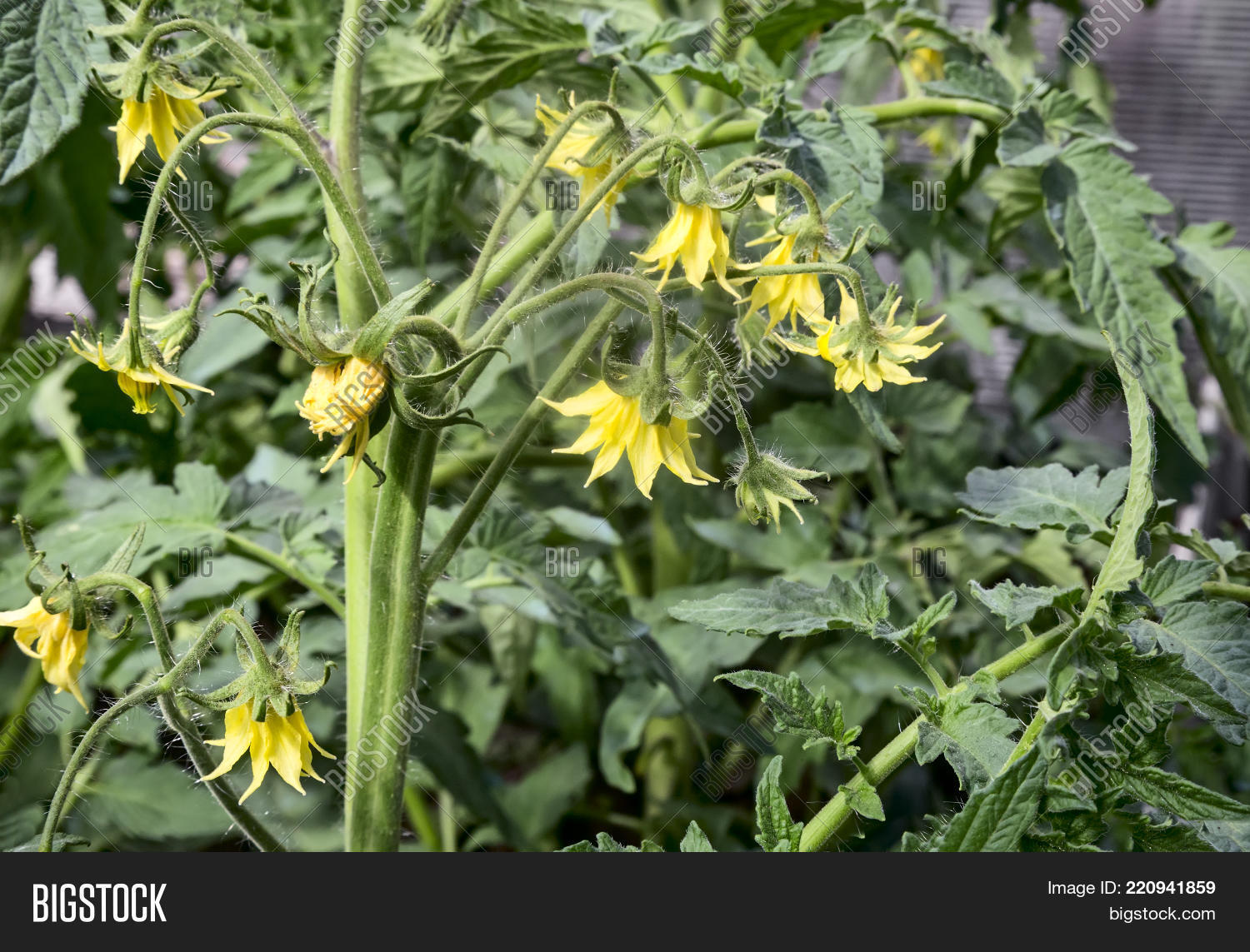 Greenhouse Bloom Plant Image Photo Free Trial Bigstock