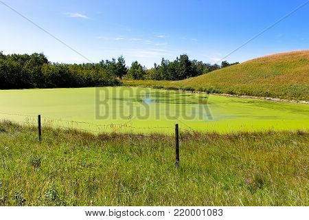 View of a drying pond covered in duckweed.