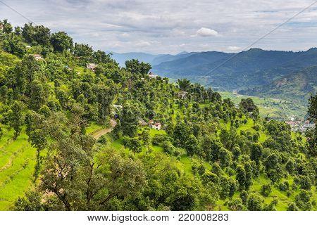 Green rice fields in Pokhara Valley, Nepal