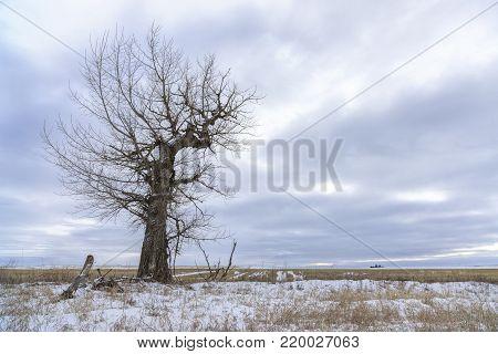 Barren tree in winter under a cloudy sky near Davenport, Washington.