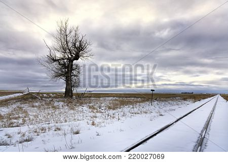 Barren tree in snowy field. Train tracks run by a barren tree in a snowy field near Davenport, Washington.