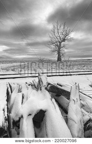 Fine art B&W of bare tree in snowy field near Davenport, Washington.