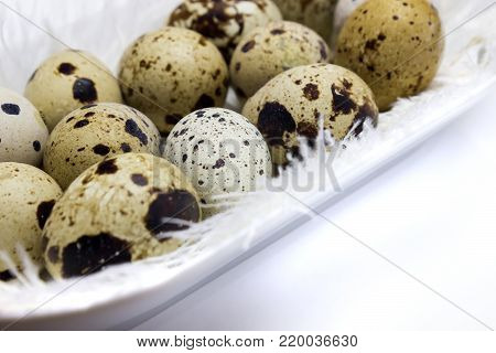 A photo of small uncooked quail eggs and white feathers in white porcelain plate on the table. A photo of quail eggs, Easter rustic background
