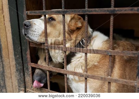 Dogs in the shelter for homeless animals