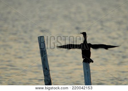 A cormorant perched over the water drying its wings in the late afternoon sun.
