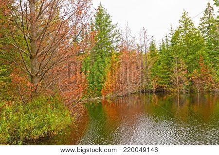 Fall Colors on Jenny Lake Flooded by a Beaver Dam in the Boundary Waters in Minnesota