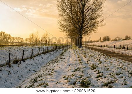 Wintry Dutch polder landscape during sunset with a seemingly endless snow-free country road next to the embankment and a row of tall bare trees.