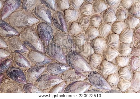 Sea texture and sea shell like background decoration in cement house wall