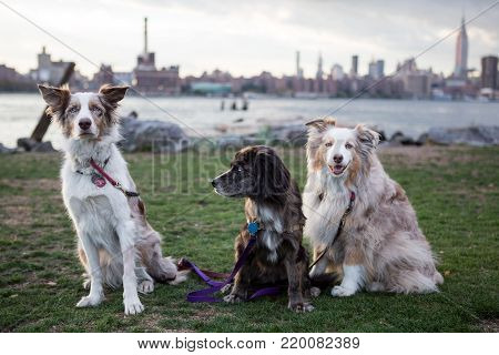 New York City dogs with view to Manhattan