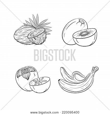 Collection set of hand drawn fruits isolated on white background. Vector illustration of coconut, kiwi, banana and persimmon in vintage sketch style - stock vector