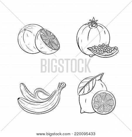 Collection set of hand drawn fruits isolated on white background. Vector illustration of orange, garnet, banana and lemon in vintage sketch style - stock vector