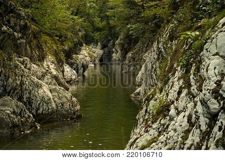 beautiful shady river gorge in a mountain forest with green gleams from the water on the rocks poster