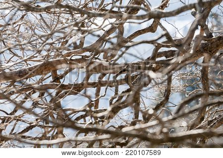 sinuous branches of a dead tree with sky background.