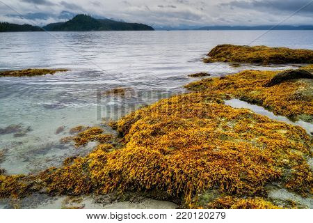 Beach and coastline in the Broken Group Islands, off the west coast of Vancouver Island, BC, Canada