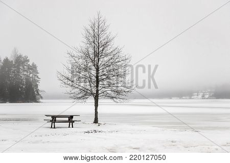 bald trees at frozen lakeside in winter