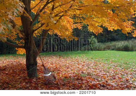 Autumn Foliage With Rake
