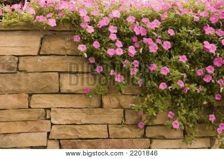 Purple Flowers On Rock Wall