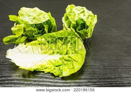 Romaine lettuce (Lactuca sativa L. var. longifolia).