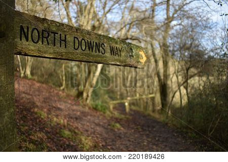 North Downs Way fingerpost set within a woodland section of the southern England hiking route within the Surrey Hills.