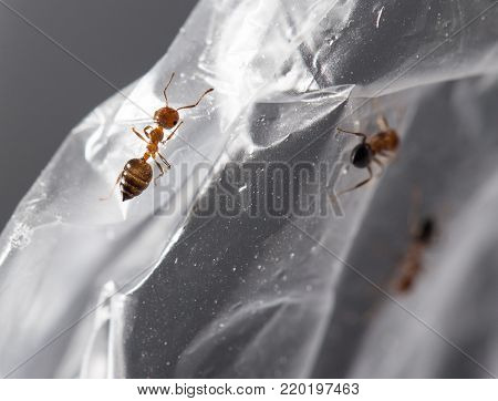 ant on cellophane . Photos in the studio