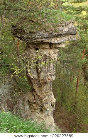 Rock Mushroom In Markusovce In Slovak Republik