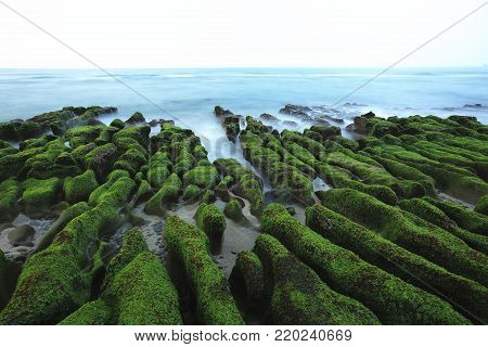 Tide ditch,Stone trench with green seaweed at seaside in spring