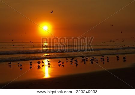 Seagulls Playing At The Beach Water Before An Orange Sunset